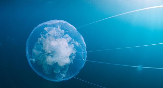 VOT_40_90_JellyfishGliding